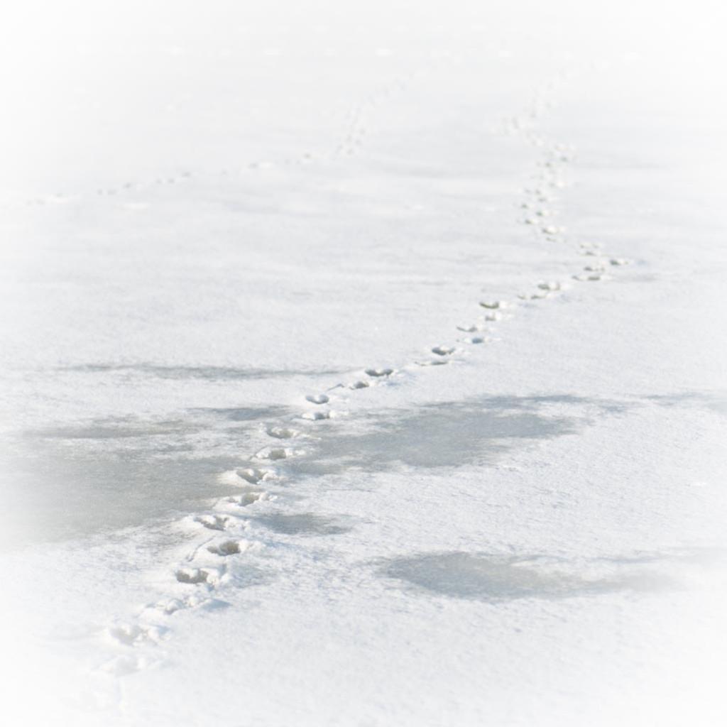 sneeuw-6